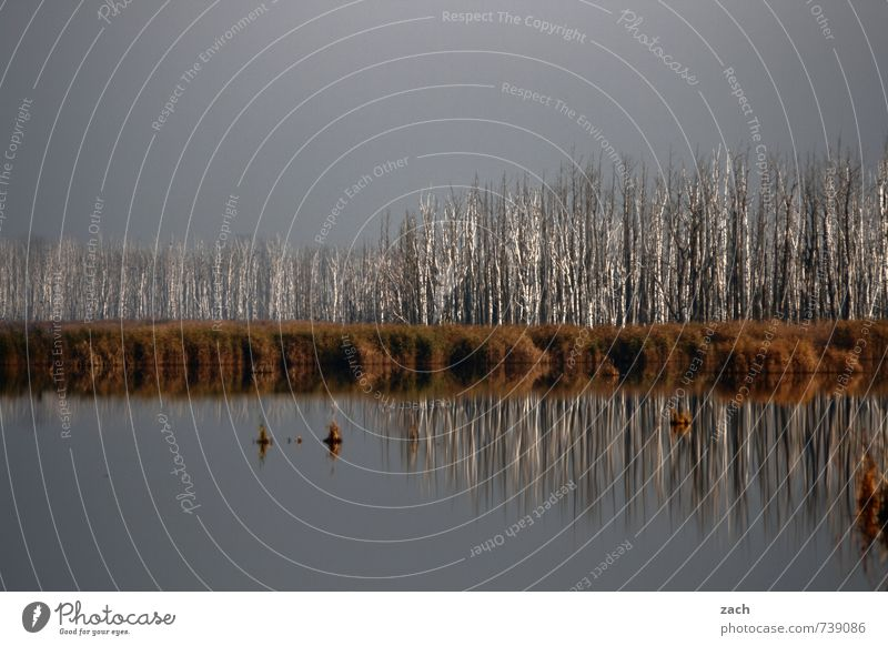 tribal assembly Environment Nature Landscape Water Sky Autumn Winter Weather Bad weather Fog Plant Tree Bushes Foliage plant Birch tree Birch wood Coast