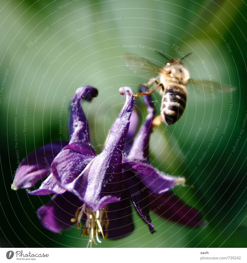 Blue Green Plant Flower Leaf Animal Meadow Blossom Flying Blossoming Wing Violet Insect Bee Foliage plant Farm animal