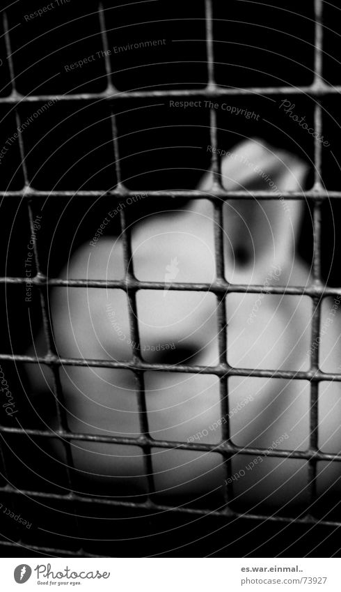 Easter's out next year. Pelt Sadness Dark Soft Black White Loneliness Hare & Rabbit & Bunny Captured Grating Cage Mesh grid Enclosed Black & white photo