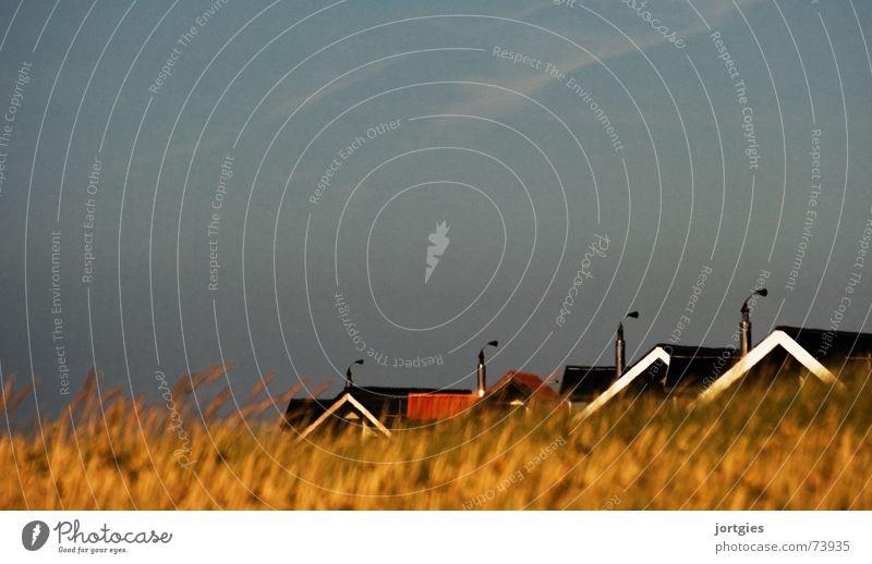 game of hide-and-seek House (Residential Structure) Roof Chimney Grass Blade of grass Grain Cornfield Hide Scandinavia Denmark Evening Beach Coast