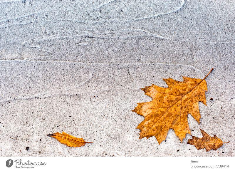 Old White Leaf Street Autumn Lanes & trails Line Brown Lie Orange Change Transience Past Offense Oak leaf Bright Colours