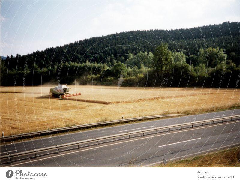 Sky Tree Forest Street Field Grain Year Wheat Rye