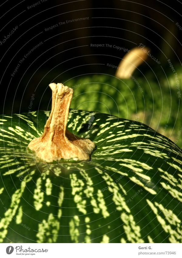 Green Arrangement Vegetable Stalk Harvest Fat Hard Hallowe'en Pumpkin Vegetarian diet Thanksgiving Pumpkin time Pumpkin seed Vegetable soup Pumpkin soup Unripe spelt grains