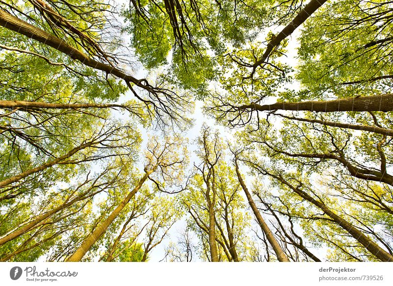 Nature Green Plant Tree Landscape Forest Environment Emotions Coast Spring Moody Tourism Beautiful weather Vantage point Lakeside Baltic Sea