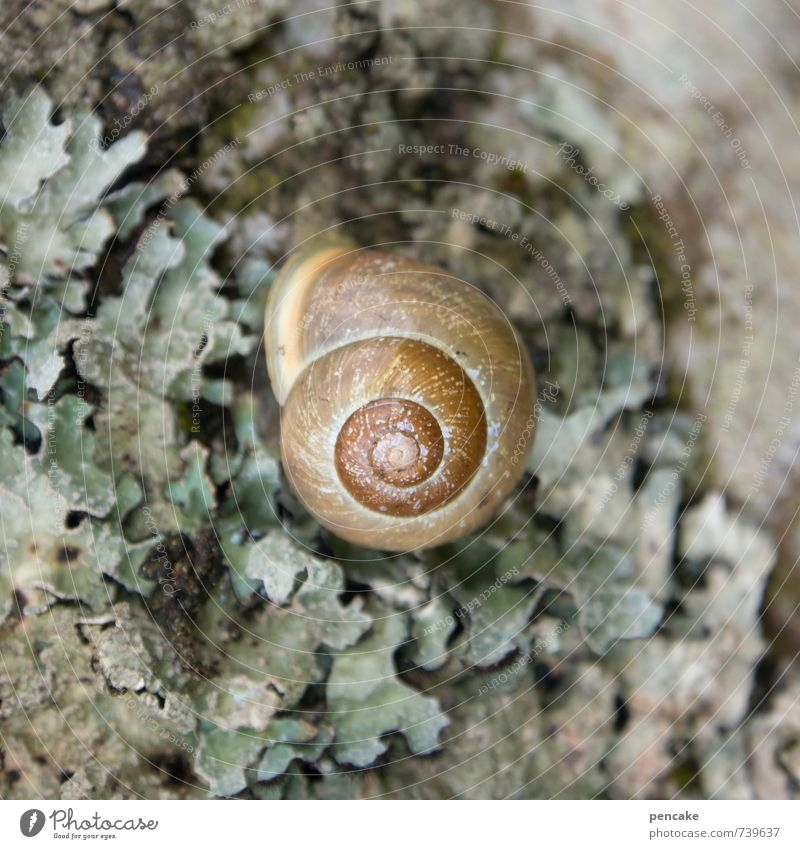 centered Nature Tree Forest Animal Snail 1 Sign Safety Protection Warm-heartedness Beautiful Serene Patient Calm Design Mysterious Puzzle Feminine Wellness