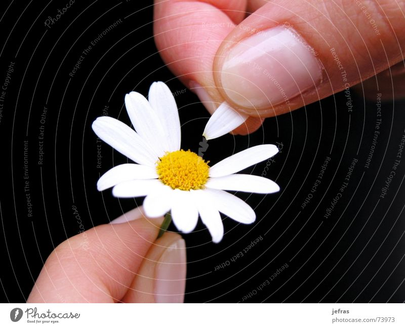 well wants me... Hand Love Passion Planning Emotions flower fingers happiness