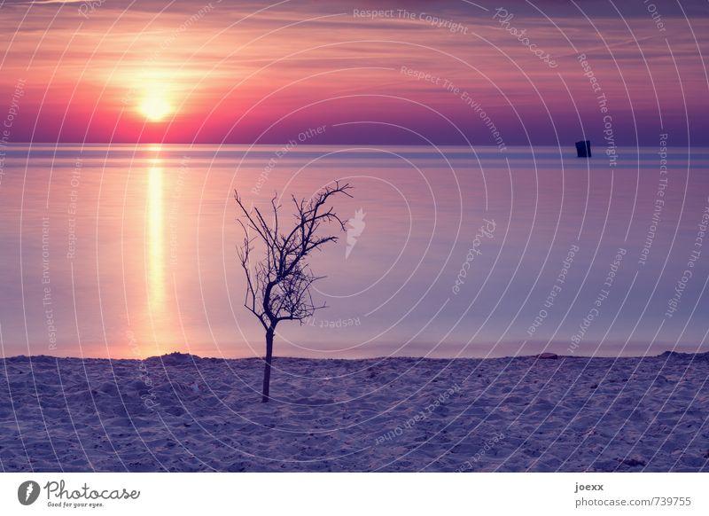 Think of . Far-off places Summer Beach Nature Sun Sunrise Sunset Sunlight Beautiful weather Tree Coast Baltic Sea Infinity Yellow Orange Red Black Romance Calm