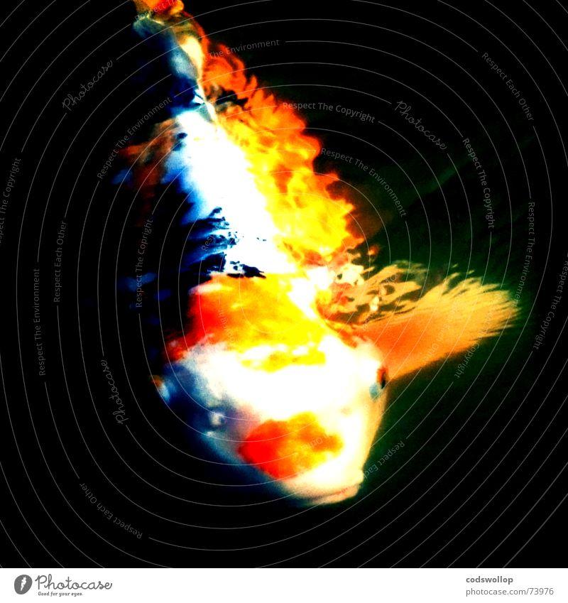 river phoenix Burn Blaze White Black Fish Gastronomy rising from the ashes flaming carp On Orange