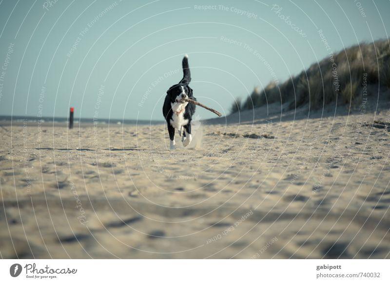 Get the stick. Nature Landscape Sun Spring Summer Coast Beach North Sea Animal Pet Dog 1 Walking Joy Happy Happiness Joie de vivre (Vitality) Spring fever