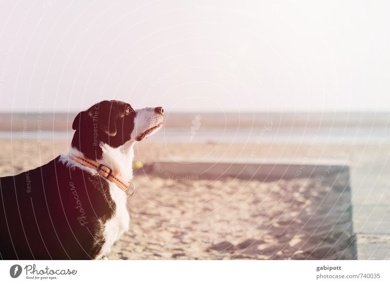 Dog Nature Vacation & Travel White Summer Ocean Relaxation Animal Far-off places Beach Black Warmth Freedom Happy Dream Leisure and hobbies