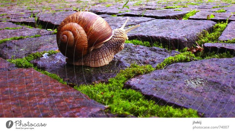 Nature Plant Vacation & Travel Animal House (Residential Structure) Life Grass Stone Rain Speed Village Living thing Cobblestones Americas Seam Snail