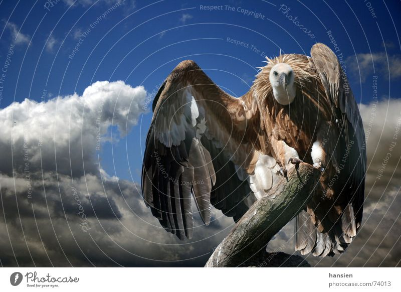 Clouds Feather Wing Dramatic Vulture