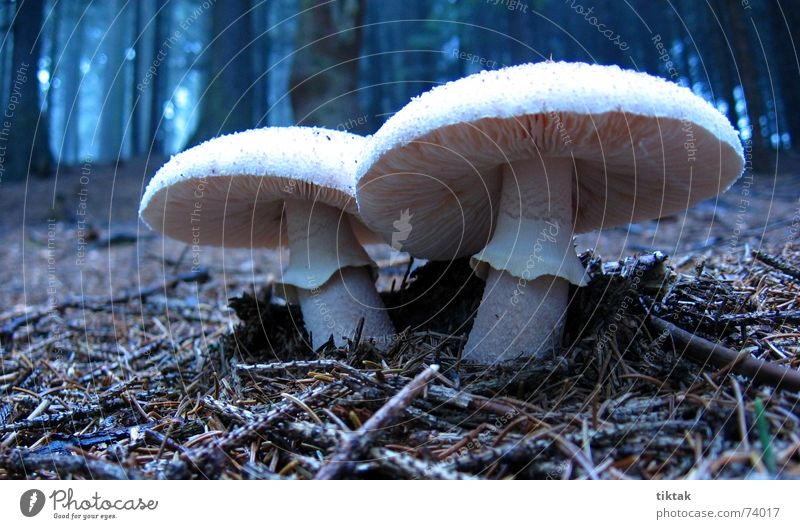 Nature White Calm Forest Dark Relaxation Autumn 2 Growth In pairs Seasons Mushroom Poison Caution Eerie Twin