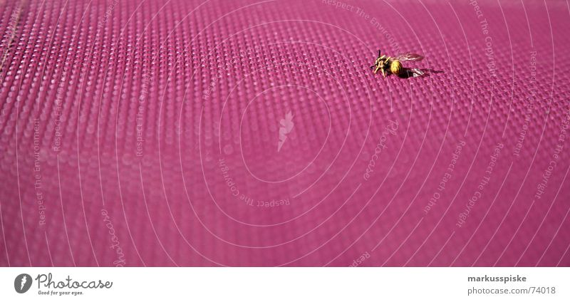 Crashed Bee Wasps Insect Sudden fall Violet tumbled wingless Chair Garden seat