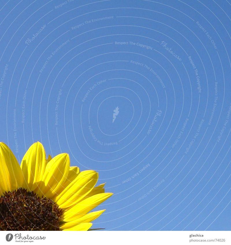 Nature Sky Flower Blue Summer Joy Yellow Life Autumn Garden Freedom Happy Landscape Happiness Blossoming Sunflower