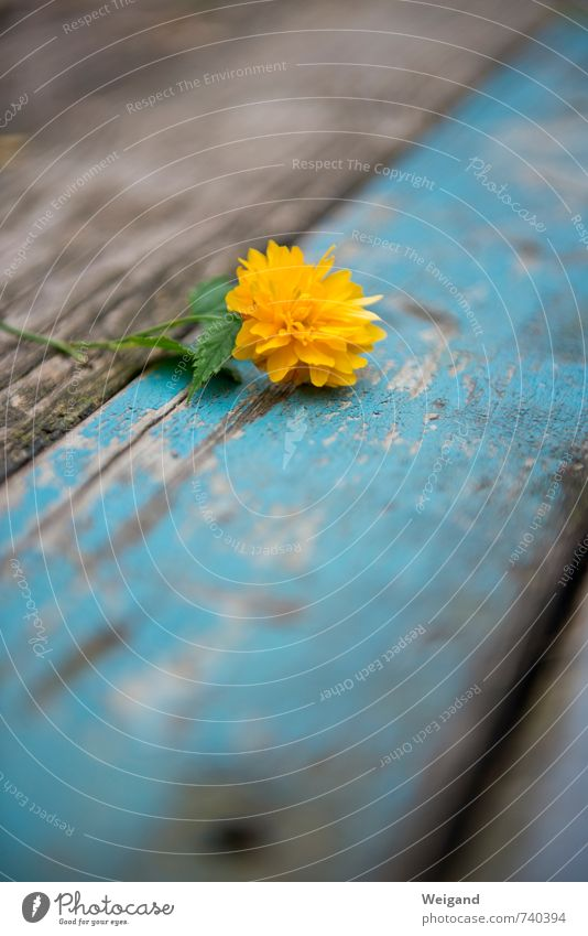 Blue Beautiful Flower Relaxation Yellow Love Healthy Wood Feasts & Celebrations Friendship Contentment Fresh Happiness Gift Warm-heartedness Romance
