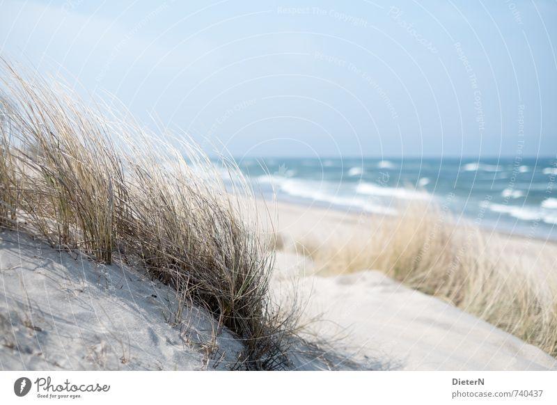 marram grass Environment Nature Landscape Grass Baltic Sea Blue White Beach dune Ocean Waves Horizon Sky Colour photo Deserted Copy Space top Day
