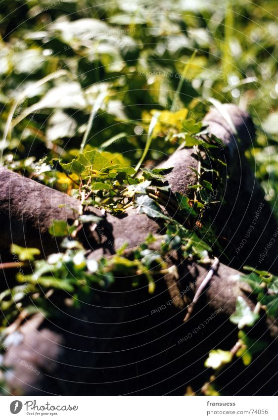 Old Plant Death Religion and faith Metal Back Modern Rust Cemetery Grave Tendril Ivy Entwine Oxydation