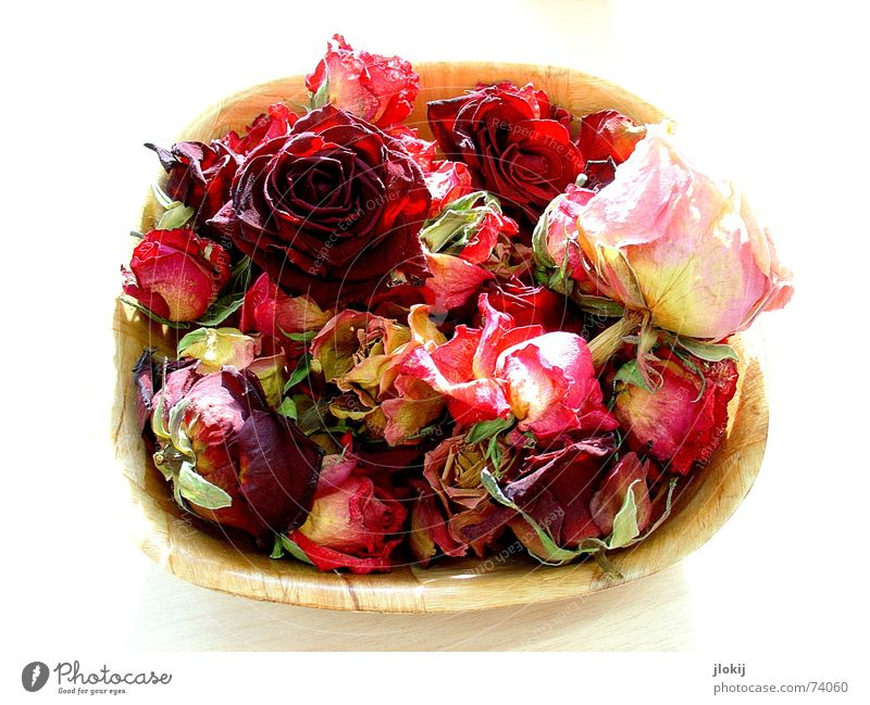 Nature Old Red Plant Wood Blossom Moody Bright Table Romance Rose Soft Delicate Isolated Image Bowl Basket