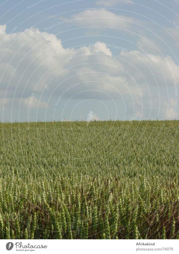 Nature Sky Clouds Field Grain Harvest Cornfield Wheat
