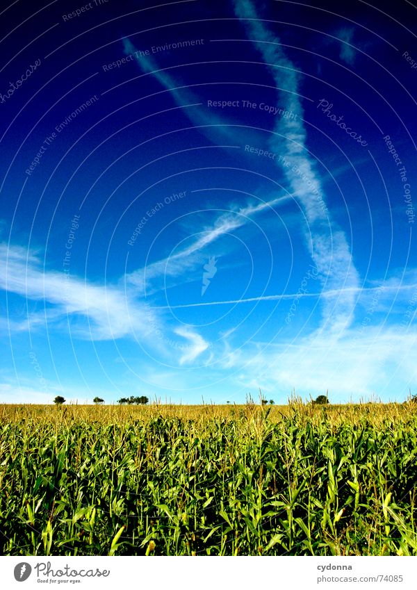 Sommerfeld I Field Minimalistic Beautiful Far-off places Summer Moody Color gradient Air Calm Clouds Stripe Horizon Sky Maize Nature Blue Clarity Floor covering