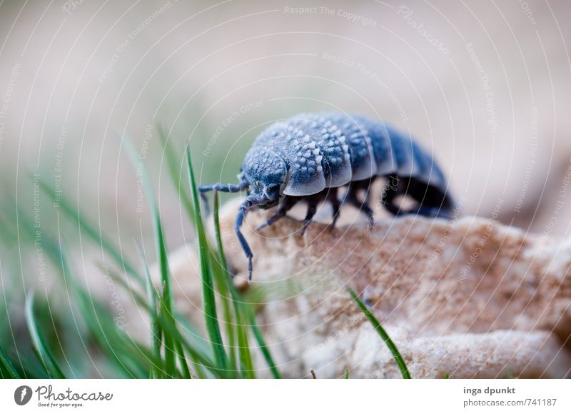 Nature Plant Landscape Animal Environment Grass Wild animal Elements Desert Insect Environmental protection Crawl Israel Articulate animals Isopod Negev