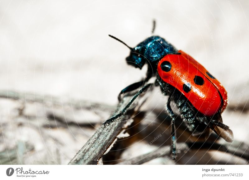 About wood and stone Environment Nature Landscape Animal Elements Earth Summer Beautiful weather Rock Desert Beetle Insect Articulate animals Ladybird Crawl 1