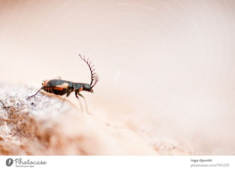 Nature Summer Landscape Animal Environment Small Earth Wild animal Elements Living thing Desert Insect Crawl Feeler Ant