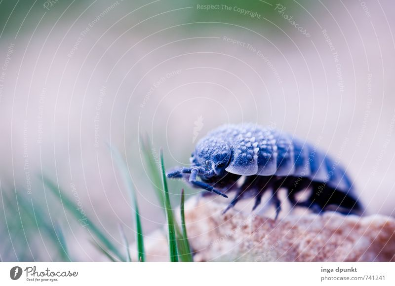 crawling toy Environment Nature Elements Earth Plant Grass Animal Insect Isopod 1 Crawl Feeler Colour photo Exterior shot Deserted Shadow Shallow depth of field