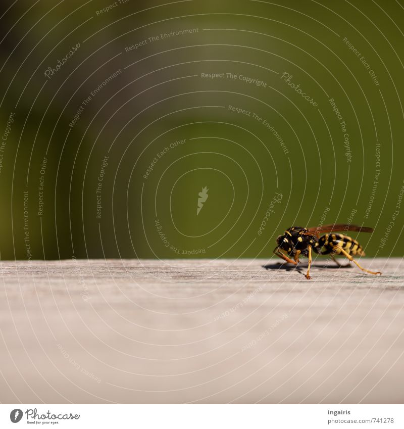 Nature Green Animal Black Yellow Gray Small Wood Work and employment Wild animal Insect Effort Crouch Wasps