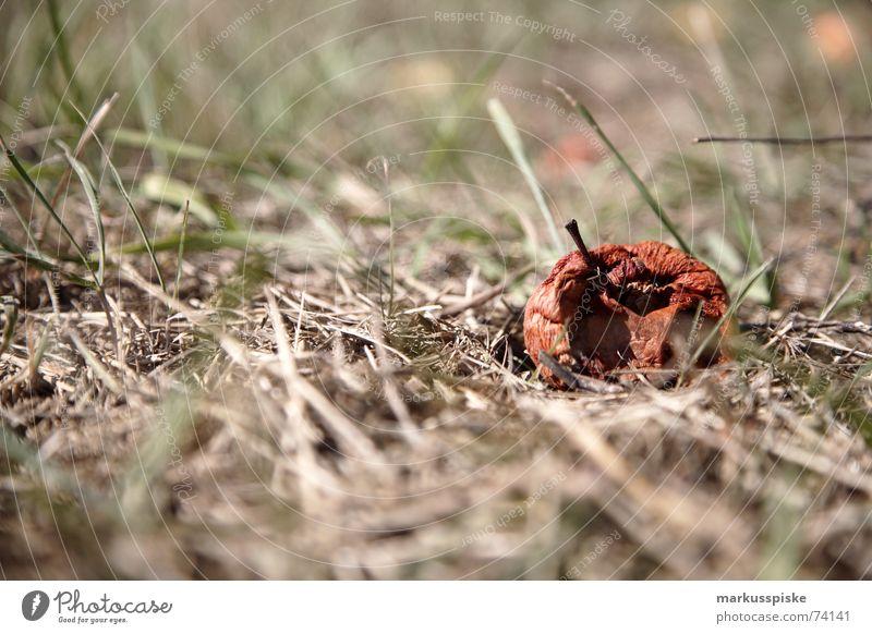 lazybones Compost Meadow Putrefy Apple Spoiled Fruit rot Like Bowl Stalk