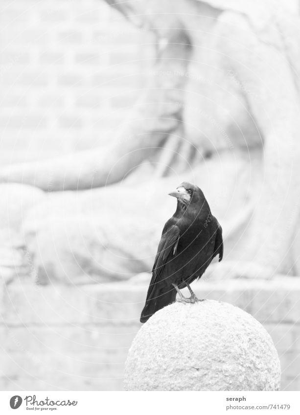 Raven Animal Life Sadness Death Stone Bird Wild Sit Observe Feather Wing Angel Monument Sculpture Beak Cemetery