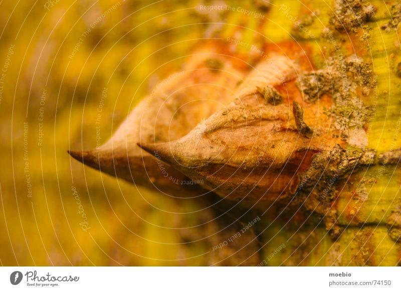 pinches Top tree puncture filoso sharp-edged peak splinter Detail