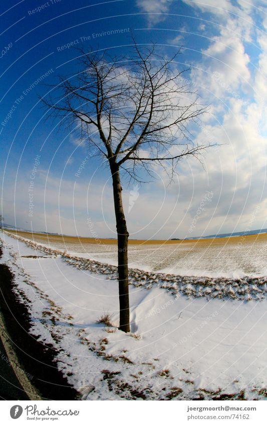 tree Tree Clouds Field Moody Cold Winter Snow Street Blue Sky Landscape Sun