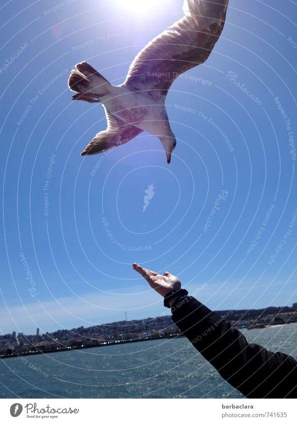 Temptation   tempting offer Arm Hand 1 Human being Water Sky Sun Ocean Town Bird Seagull Animal Flying Maritime Blue Joy Trust Love of animals Appetite