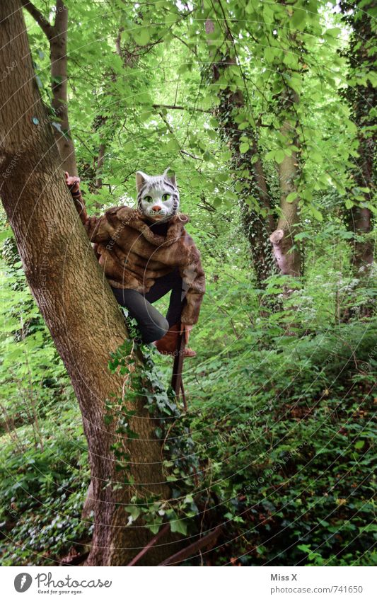 meow Human being Androgynous 1 18 - 30 years Youth (Young adults) Adults Nature Tree Ivy Forest Virgin forest Animal Wild animal Cat Sit Mask Animal face