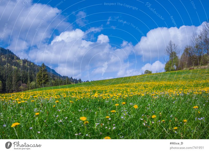Blossoming landscape Nature Landscape Plant Sky Sun Sunlight Spring Beautiful weather Flower Wild plant Dandelion Meadow Hill Flower meadow feet Federal eagle