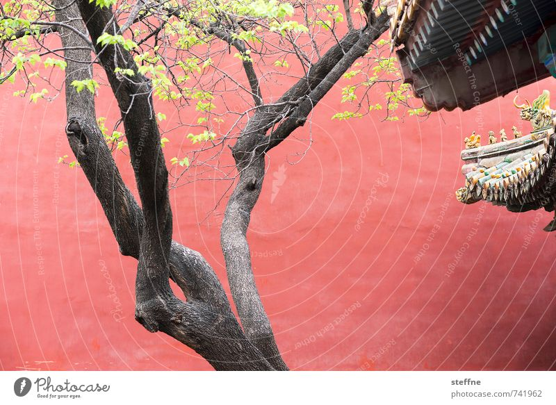 Green Tree Red Wall (building) Wall (barrier) Tree trunk China Palace Leaf canopy Beijing Asian architecture