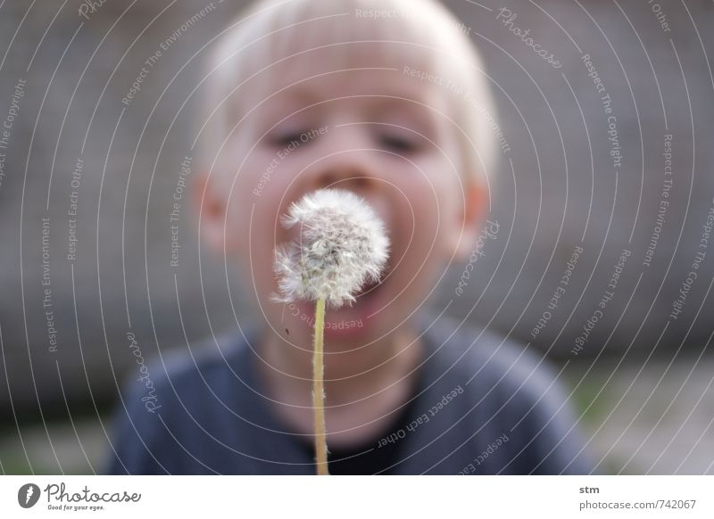 Blow! (333) Leisure and hobbies Playing Child Toddler Boy (child) Family & Relations Infancy Life 1 Human being 1 - 3 years 3 - 8 years Nature Plant Wild plant