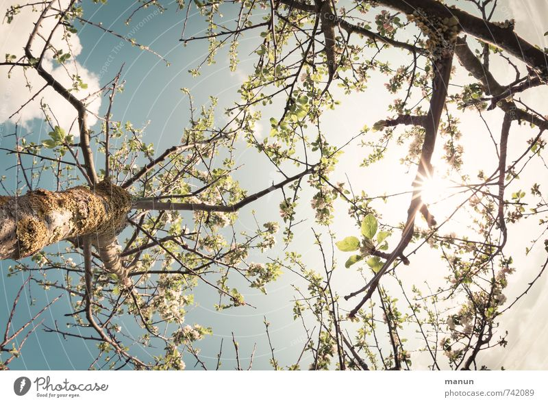vernally Nature Sky Sun Spring Tree Leaf Branch Natural Warmth Spring fever Idyll Perspective Growth Colour photo Exterior shot Deserted Day Light Contrast