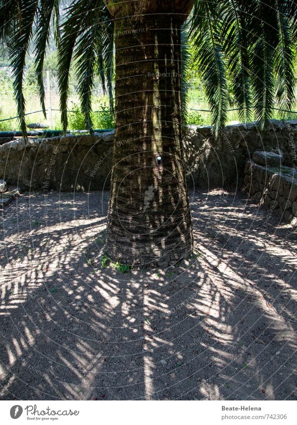Palma de Mallorca Nature Summer Plant Tree Palm tree Park Relaxation To enjoy Esthetic Healthy Brown Green Black Contentment Safety (feeling of) Shadow