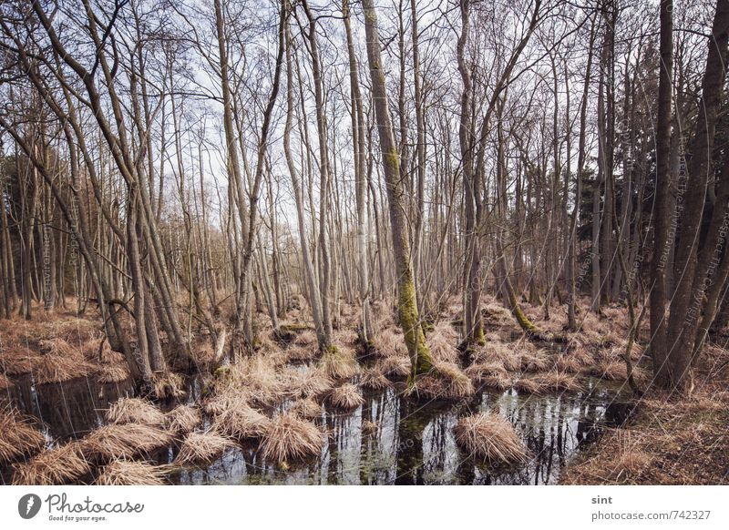 moorland Trip Nature Landscape Beautiful weather Forest Bog Marsh Wood Water Relaxation Vacation & Travel Hiking Dark Creepy Sustainability Wet Natural Slimy