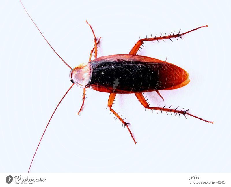 cockroach Plagues Posture Attack Pests Trash Vacation & Travel Destroy Destruction bugs cellar cockroaches crash dead death dirt disgust eats extinction fear