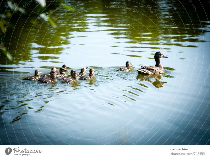 family trip Happy Harmonious Adventure Nature Water Spring Beautiful weather Pond Animal Animal family Swimming & Bathing Exceptional Together Cute Brown