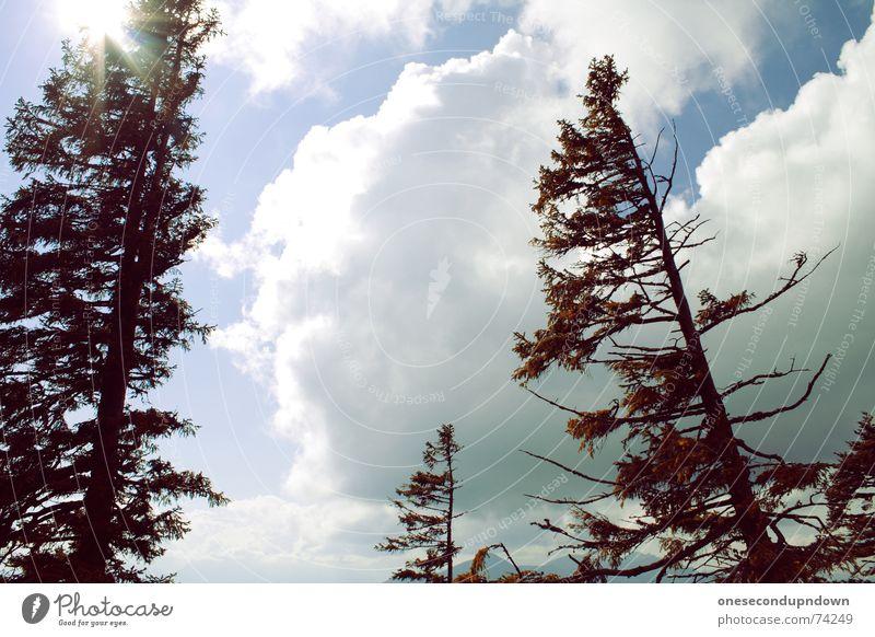 Beautiful Sky Tree Sun Summer Clouds Above Mountain Gray Weather Tall Level Branch Alps Joie de vivre (Vitality) Tree trunk