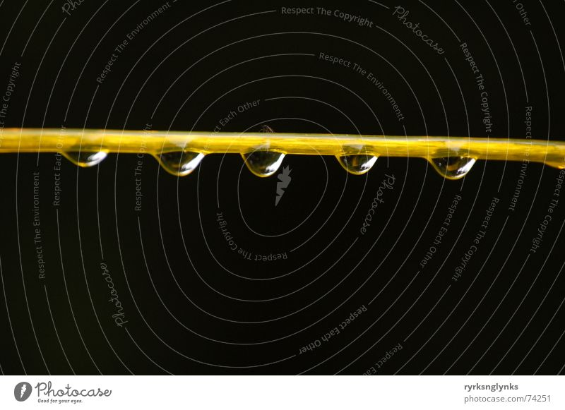 Water Tree Yellow Autumn Rain Drops of water Rope Multiple String 5 Society Dew Attachment Clothesline