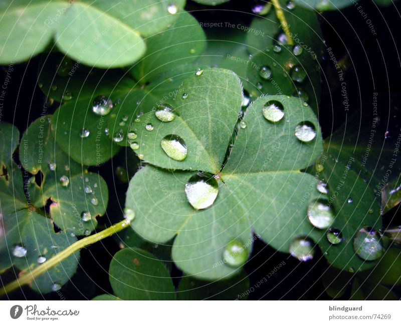 Plant Green Red Leaf Life Blossom Happy Garden Rain Dream Fresh Drops of water Wet Sphere Damp Clover