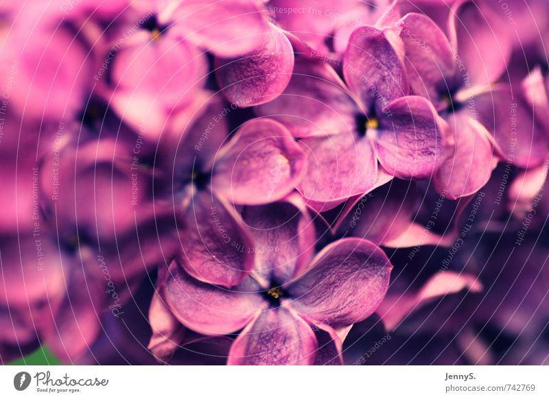 Nature Colour Plant Flower Spring Blossom Growth