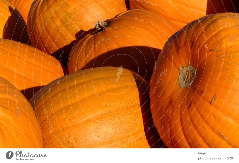 pumpkin Colour photo Light Shadow Vegetable Vegetarian diet Hallowe'en Yellow Pumpkin
