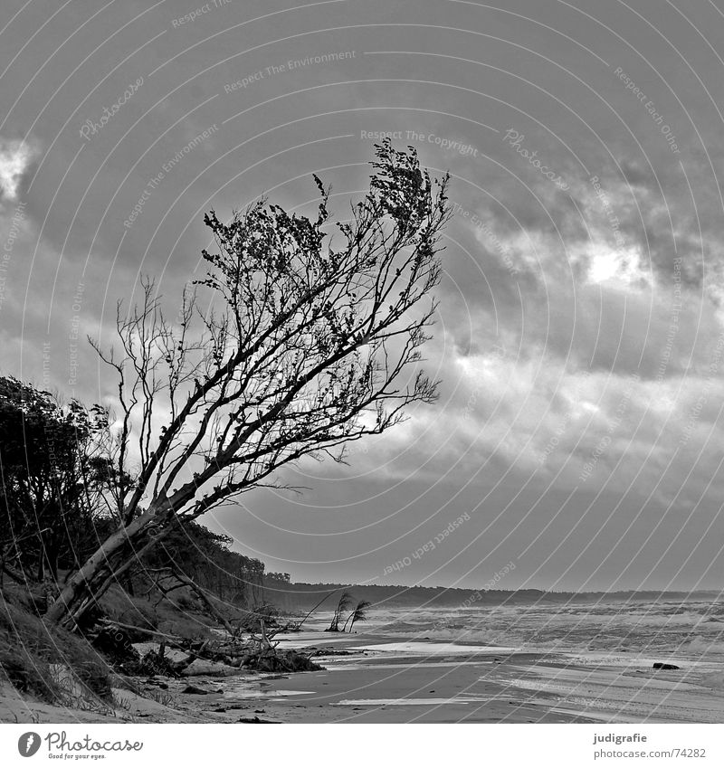 Nature Water Sky Tree Ocean Beach Black Clouds Loneliness Forest Gray Lake Landscape Waves Coast Weather